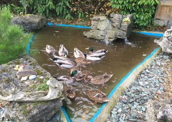 Good News - Wanted - A Village Pond