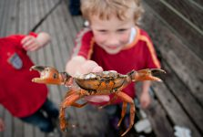 events-crabbing_credit_chris_taylor