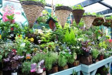 events-plant-stall